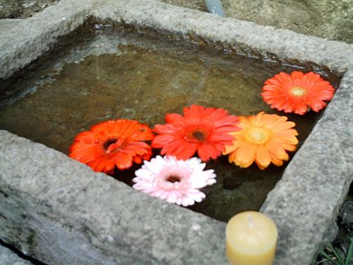 Flores mojadas
